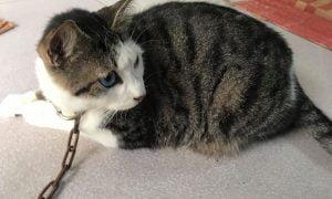 Tả con mèo lớp 4 - Hướng dẫn làm văn hay