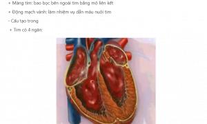 Tim và mạch máu