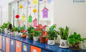 Cây trồng trong lớp học