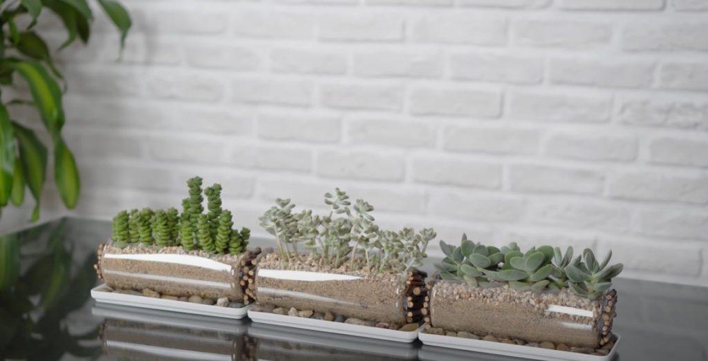 """8 Cây trồng trong lớp học """"thanh lọc không khí"""" + 6 Ý tưởng trang trí sáng tạo"""